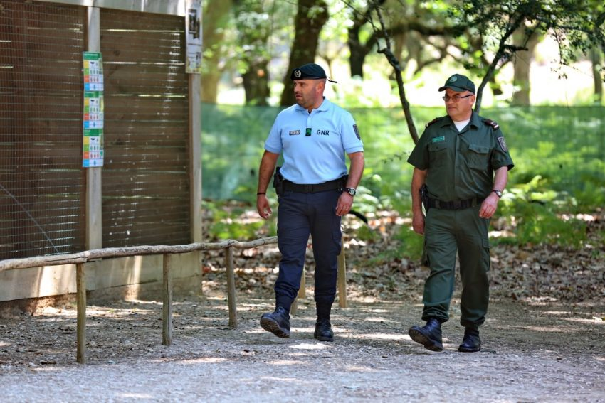 GNR abre três vagas para guarda-florestal em Barcelos